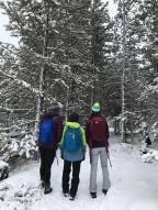 Winter Wonderland – Jackson Hole, Wyoming